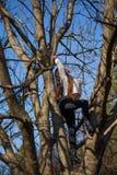 La visión inferior que encanta a la muchacha delgada linda está encima de árbol inusual sin las hojas en el cielo del fondo imagen de archivo