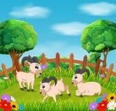 La visión natural con la acción de la cabra en la yarda alrededor de las flores libre illustration