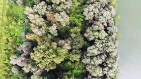 La visión sobre árboles acerca al río Danubio almacen de metraje de vídeo