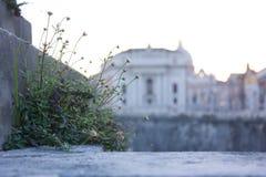 La visión sobre la basílica del Vaticano, Roma Foto de archivo