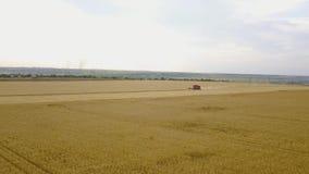 La vista aérea de la máquina segadora recolecta el trigo en la puesta del sol Cosecha del campo de grano, estación de la cosecha  almacen de metraje de vídeo
