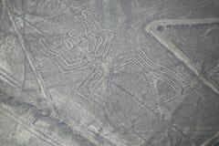 La vista aérea de Nazca alinea - el geoglyph de la araña, Perú fotografía de archivo