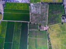 La vista aérea de la textura y del modelo del arroz verde coloca imágenes de archivo libres de regalías