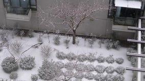 La vista aérea del apartamento de cintura baja y el pequeño árbol durante ventisca fría nievan almacen de video