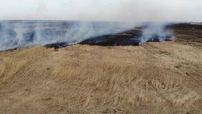 La vista a?rea del campo ardiendo, vuela detr?s Desastre e impacto negativo en la naturaleza almacen de video