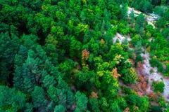 La vista aerea dei pini verdi in foresta in alte montagne atterra Fotografia Stock