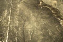La vista aerea del geoglyph del colibrì, Nazca allinea, il Perù Immagine Stock