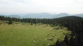 La vista aerea del prato e della foresta dell'abete in Pirenei ha filmato con un fuco, Francia stock footage