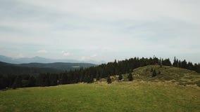 La vista aerea del prato e della foresta dell'abete in Pirenei ha filmato con un fuco, Francia video d archivio