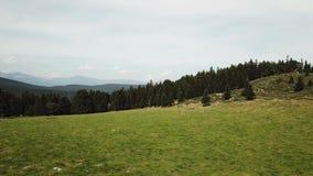 La vista aerea del prato e della foresta dell'abete in Pirenei ha filmato con un fuco, Francia archivi video