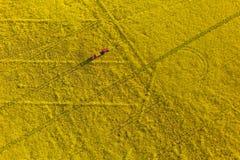 La vista aerea del raccolto giallo della violenza sistema con il trattore Fotografia Stock Libera da Diritti