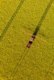 La vista aerea del raccolto giallo della violenza sistema con il trattore Fotografie Stock Libere da Diritti