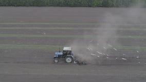 La vista aerea del trattore guida attraverso il campo e le piantine delle materozze archivi video