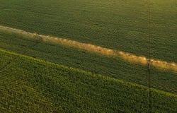 La vista aerea dell'attrezzatura di irrigazione che innaffia la soia verde pota Immagine Stock Libera da Diritti