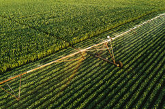 La vista aerea dell'attrezzatura di irrigazione che innaffia la soia verde pota Immagini Stock