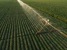 La vista aerea dell'attrezzatura di irrigazione che innaffia la soia verde pota Immagini Stock Libere da Diritti