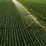 La vista aerea dell'attrezzatura di irrigazione che innaffia la soia verde pota Fotografia Stock