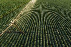 La vista aerea dell'attrezzatura di irrigazione che innaffia la soia verde pota Fotografia Stock Libera da Diritti