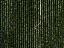 La vista aerea dell'attrezzatura di irrigazione che innaffia la soia verde pota Fotografie Stock
