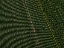 La vista aerea dell'attrezzatura di irrigazione che innaffia la soia verde pota Fotografie Stock Libere da Diritti