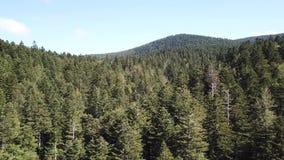 La vista aerea della foresta dell'abete in Pirenei ha filmato con il fuco, Francia video d archivio