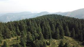 La vista aerea della foresta dell'abete in Pirenei ha filmato con un fuco, Francia video d archivio