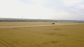 La vista aerea della mietitrebbiatrice riunisce il grano al tramonto Raccolta del campo di grano, stagione del raccolto 4K Bello  video d archivio