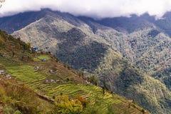 La vista aerea della piantagione a terrazze sulla collina pende nel Nepal Immagine Stock Libera da Diritti