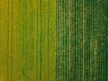 La vista aerea delle file della patata ed il seme di ravizzone sistemano Campi agricoli gialli e verdi in Finlandia fotografie stock