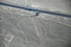 La vista aerea di Nazca allinea - albero e passa i geoglyphs, Perù Fotografia Stock