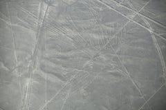 La vista aerea di Nazca allinea i geoglyphs nel Perù Immagini Stock