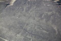La vista aerea di Nazca allinea - il geoglyph del colibrì, Perù Fotografie Stock