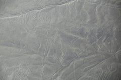 La vista aerea di Nazca allinea - Monkey il geoglyph, Perù Immagini Stock Libere da Diritti