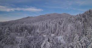 la vista aerea 4k della foresta congelata - terra di meraviglia di inverno - l'inverno vaga terra archivi video