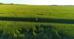 La vista aerea sul giovane ragazzo, quello guida una bicicletta attraverso un campo di erba del grano sulla vecchia strada rurale archivi video