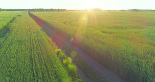La vista aerea sul giovane ragazzo, quello guida una bicicletta attraverso un campo di erba del grano sulla vecchia strada rurale stock footage