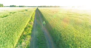 La vista aerea sul giovane ragazzo, quello guida una bicicletta attraverso un campo di erba del grano sulla vecchia strada rurale video d archivio