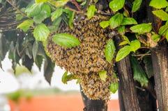 La vista al aire libre de los ángulos de la abeja guarda la jerarquía y construye una jerarquía del panal con la miel dulce, jera Foto de archivo