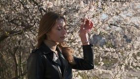 La vista alta vicina dei touchs caucasici piacevoli della ragazza ed odora i fiori bianchi del ciliegio con il fondo impressionan video d archivio