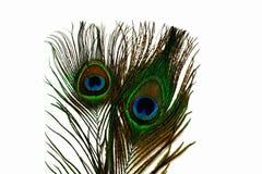 La vista alta vicina della piuma variopinta splendida del pavone ha isolato immagine stock