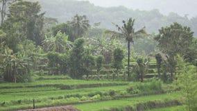 La vista da parla monotonamente i terrazzi del riso della montagna e la casa degli agricoltori Bali, Indonesia video d archivio