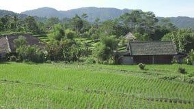 La vista da parla monotonamente i terrazzi del riso della montagna e la casa degli agricoltori Bali, Indonesia archivi video
