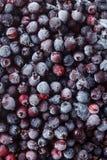La vista de arriba a rozen el shadberry Foto de archivo libre de regalías