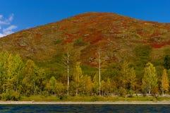La vista de la montaña se cubre con los árboles rojos del musgo y de abedul en otoño y el río Imagen de archivo libre de regalías