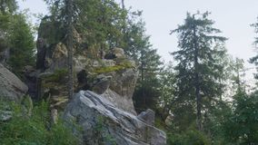 La vista de los árboles de pino enormes en un bosque con el musgo cubrió los cantos rodados Bosque del paisaje del desierto con l Imagen de archivo libre de regalías