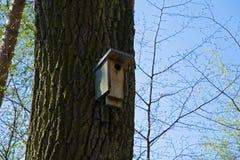 La vista de una pajarera de madera montó en un tronco de árbol en la primavera y el verano en el bosque debajo de un cielo azul Fotografía de archivo libre de regalías