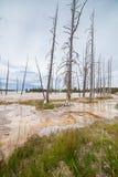 La vista degli alberi morti ha riflesso in un lago Immagine Stock
