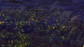 La vista dei fiori gialli sviluppati ondeggia sotto l'acqua trasparente del fiume Albero nel campo nave Gambi verdi video d archivio