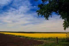 La vista del campo con el campo de la rabina aró el bosque del campo Foto de archivo