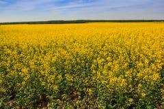 La vista del campo con el campo de la rabina aró el bosque del campo Fotografía de archivo